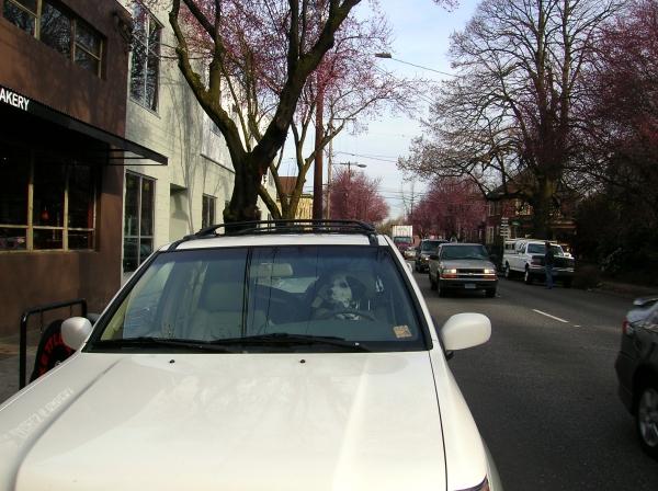 driving-dog.jpg