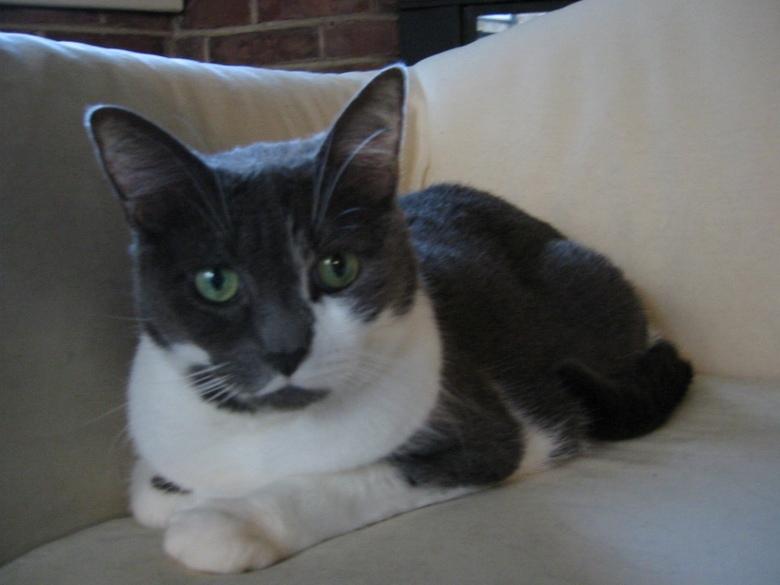 Artemis on White Sofa