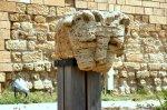 caesaria lion